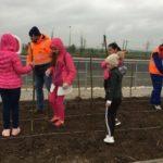 Sălcii plantate în parcul CTPark Bucharest West