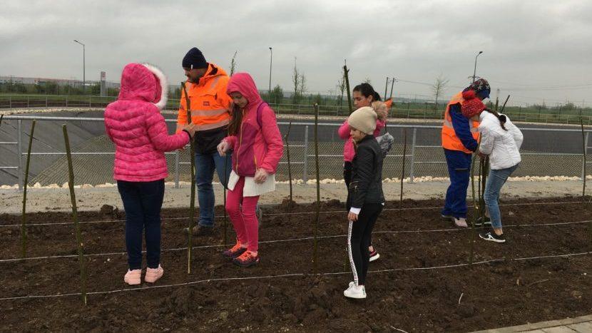 CTP plantare sălcii