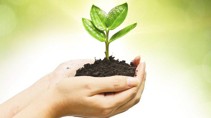 Gebrüder Weiss a plantat în 2020 câte un copac pentru fiecare angajat